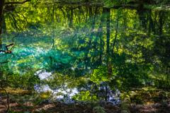 新緑と翠  丸池様  その7