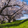 春景と鳥海山  ②