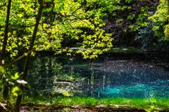 新緑と翠  丸池様  その4