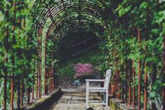 バラのないバラ園