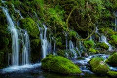 晩春から初夏へ    元滝伏流水  その2