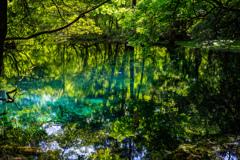 新緑と翠 丸池様 その2