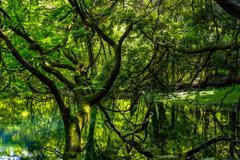 新緑と翠  丸池様  その3
