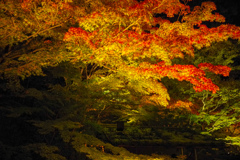 松島  円通院ライトアップ