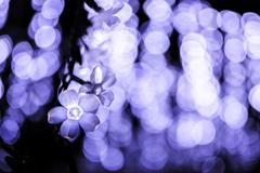 冬ならではの花 ②
