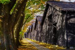 木漏れ日の山居倉庫