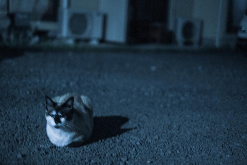 夜になると猫は・・・