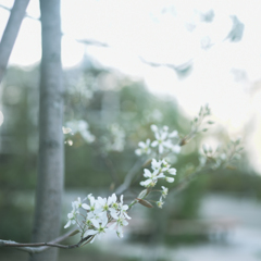 晴れ時々曇りの日~blanche