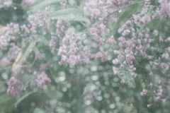 rainy~雫