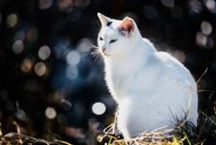 モデル猫2