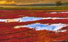 道東の秋 能取湖 <湖が赤く染まり、鳥たちが秋の訪れを感じる時。>