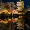 東寺ライトアップ