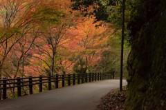 高雄山の紅葉