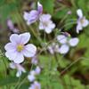 森の白い花