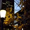 銀杏と街灯