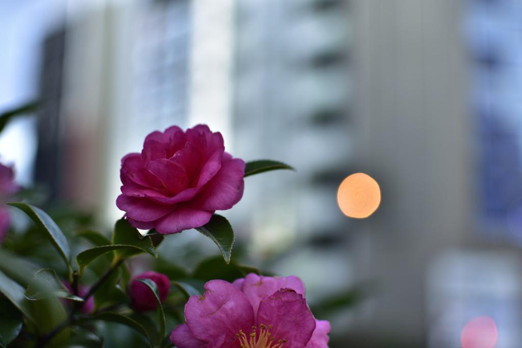 萬世橋脇の花壇