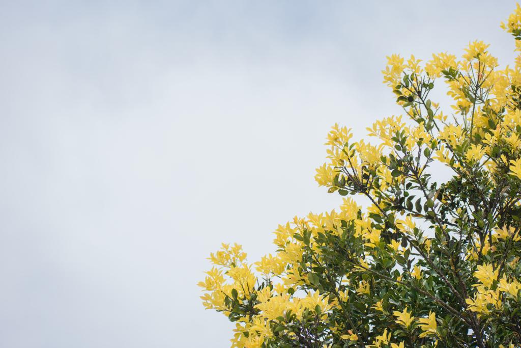黄色い部分