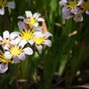 お庭の花壇拝見2