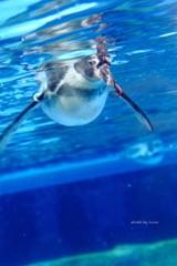 泳げ!ペンギンくん