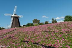 ペチュニアと風車