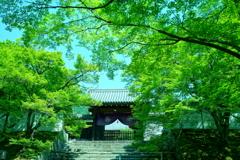 緑と曼殊院門跡