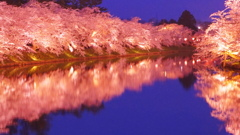 弘前公園 桜ライトアップ