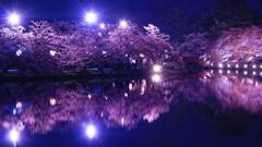 弘前公園 夜桜リフレクション