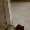 野良猫ブルース2 ~あの日の記念写真~