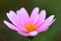 この花は。。