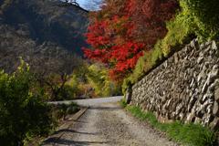 坂道の紅葉