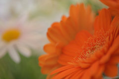 Macro shot in room③