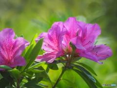 春の名城公園5