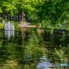 水辺の新緑1