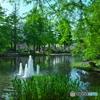 水辺の新緑3