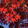 小幡緑地の紅葉4