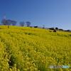 愛知牧場の春1 ~ 黄色の絨毯