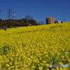 愛知牧場の春5