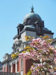 サトザクラ3 〜 ドーム屋根と八重の桜