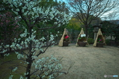 春の庭園3 ~ 梅と牡丹