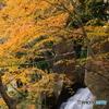 新春の紅葉4