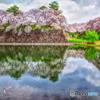 満開!名古屋城 お堀の桜