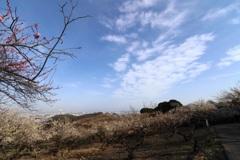 海が見える梅林(2)