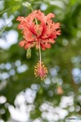 温室の花2~線香花火