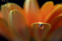 オレンジのイヤリング