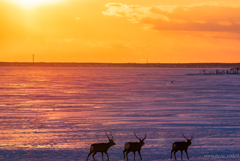 野付半島の夕景