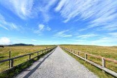 美ヶ原牧場の道