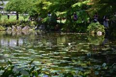 8月のモネの池
