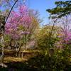 嵐山その6