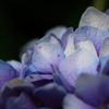 薄紫に光る