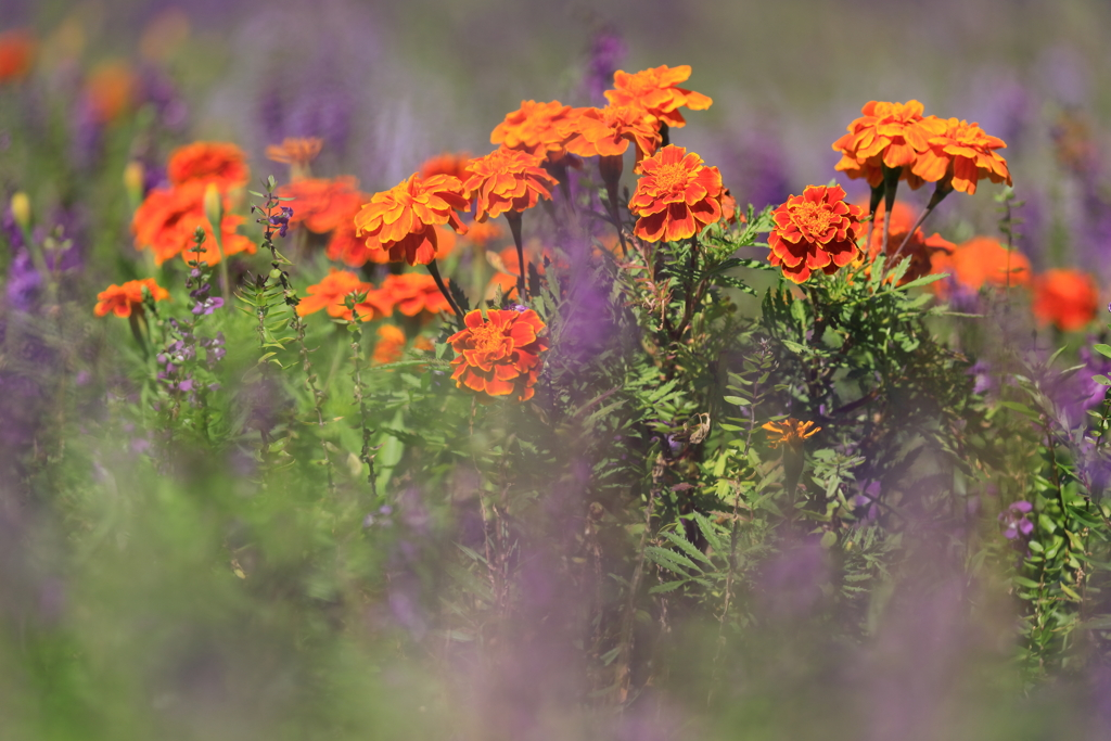 幻の中に浮かぶ花たち